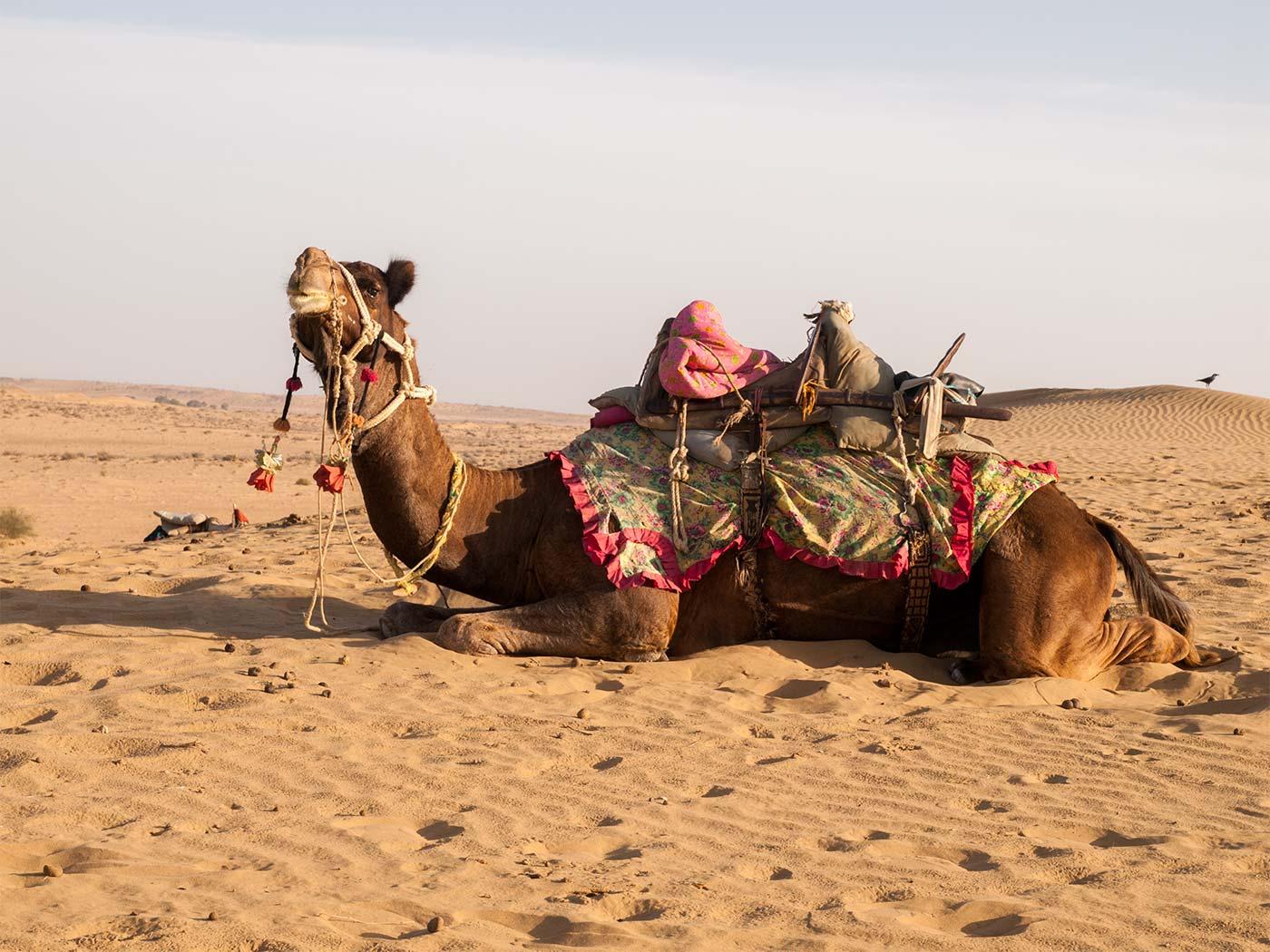 Thar Desert - Jaisalmer | Happymind Travels