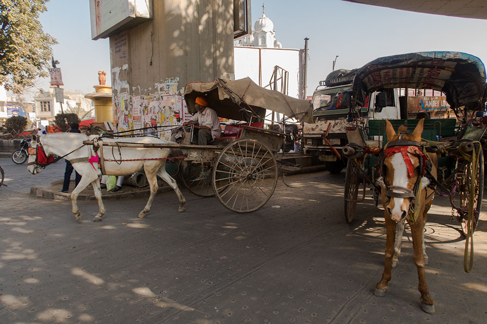 Horse Carriages in Amritsar   Happymind Travels