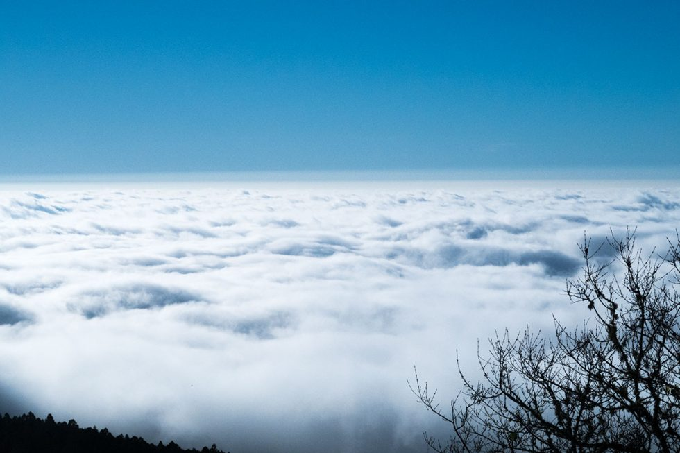 Walk on the clouds in the Alishan scenic forest | Happymind Travels