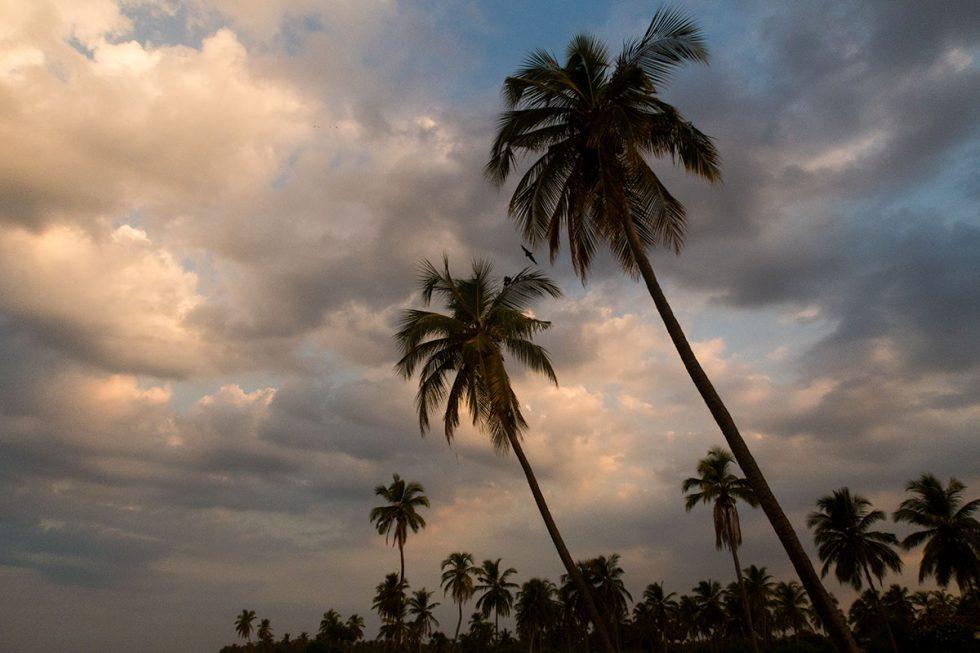 Coconut trees on Nilaveli Beach - Sri Lanka | Happymind Travels