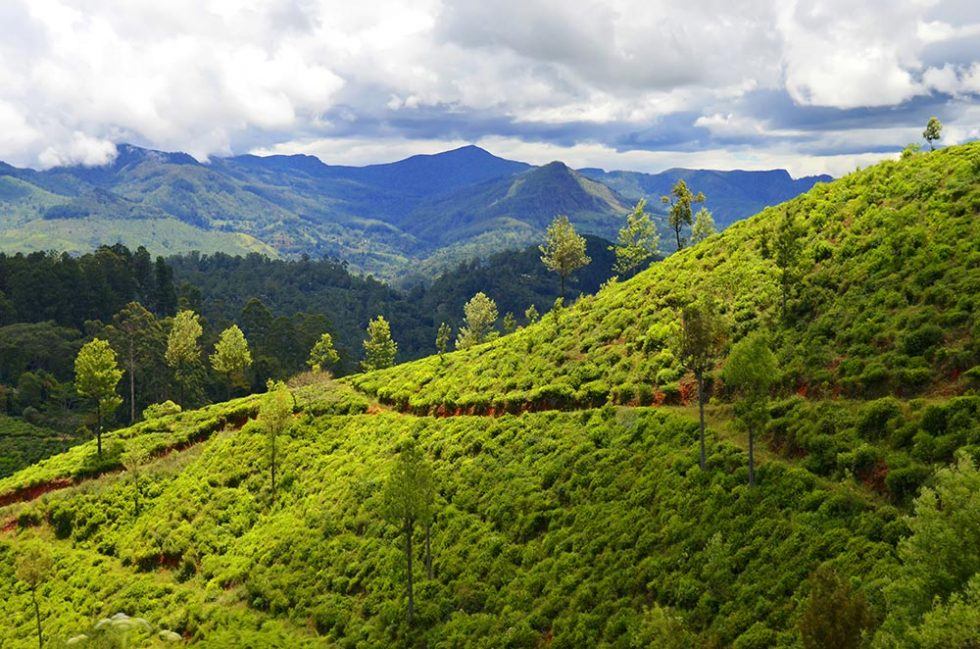 Delicious landscape on the Train Trip from Kandy to Ella - Sri Lanka | Happymind Travels