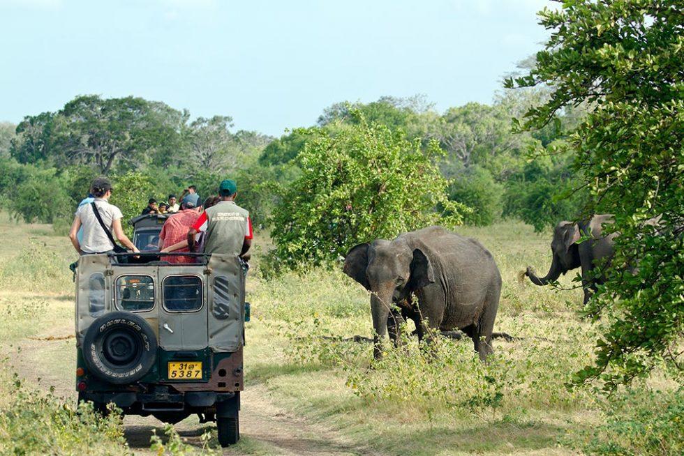 Safari in Minneriya National Park in Sri Lanka | Happymind Travels