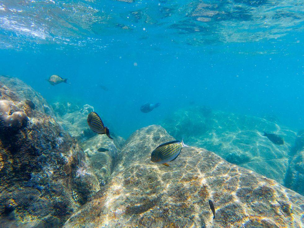 Snorkeling em Pigeon Island, Nilavelli - Sri Lanka | Happymind Travels