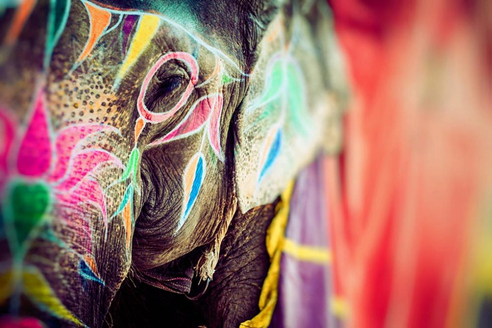 Decorated elephant at the Holi Festival in Jaipur, India | Happymind Travels