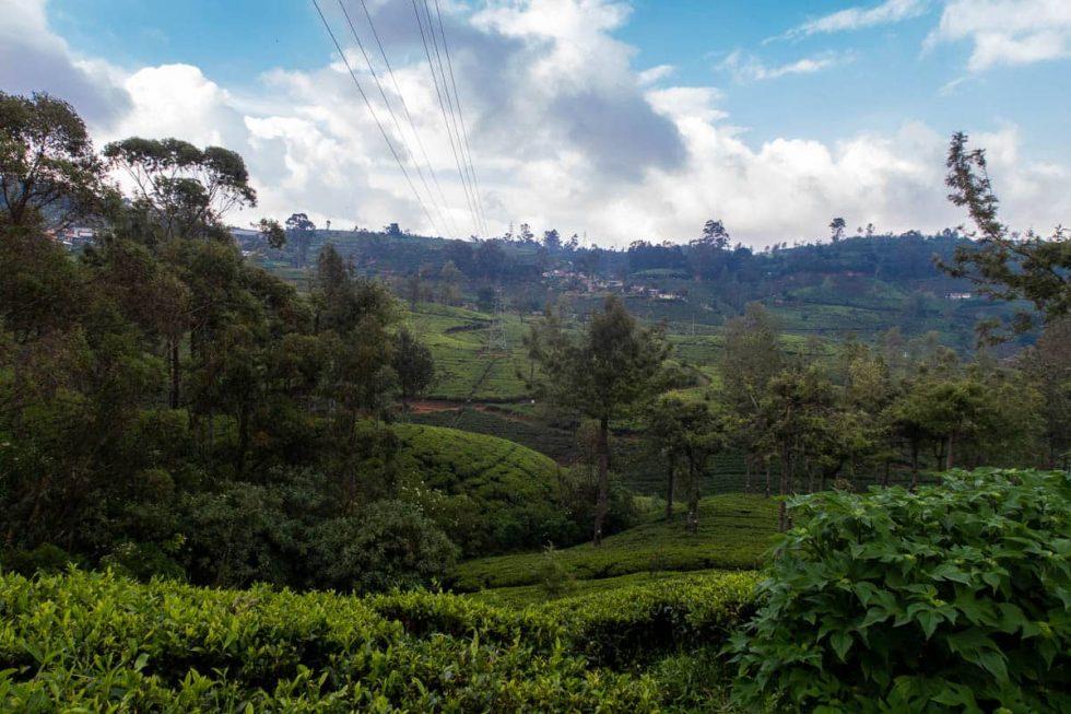 View of the Tea Fields at Pedro Tea Factory in Nuwara Eliya, Sri Lanka | Happymind Travels