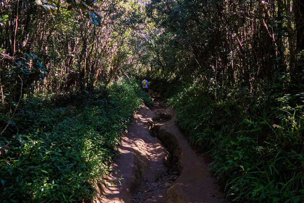 Trail in the middle of Horton Plains in Sri Lanka | Happymind Travels